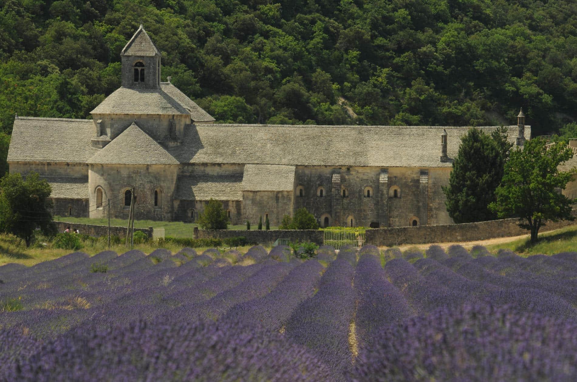 Visita dell'abbazia di Senanque a Gordes nel Luberon e i campi di lavanda