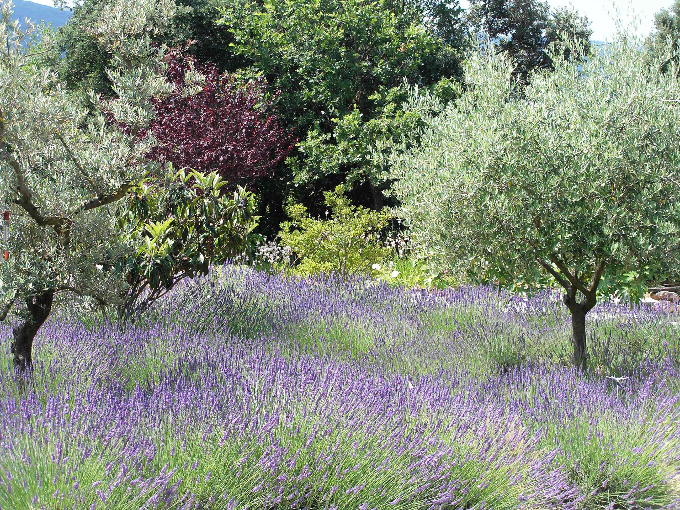 The garden is a place of relaxation and serenity with lavender