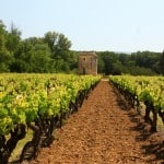 Wine yard in Provence